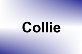 Collie name image