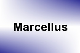 Marcellus name image