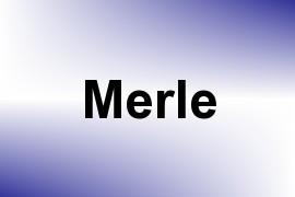 Merle name image