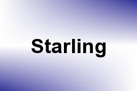 Starling name image